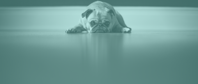pug sad about bad email outreach